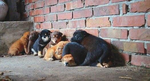 """""""流浪狗安乐死""""是治理狗患的次优选择"""
